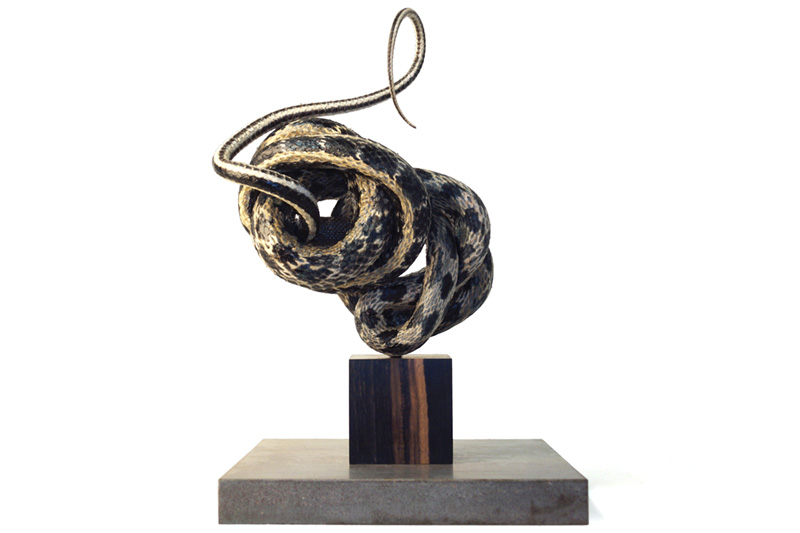 A taxidermied snake sculpture by Polly Morgan