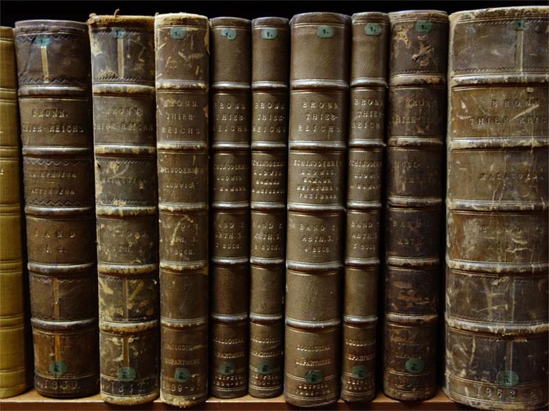 A row of books on a shelf