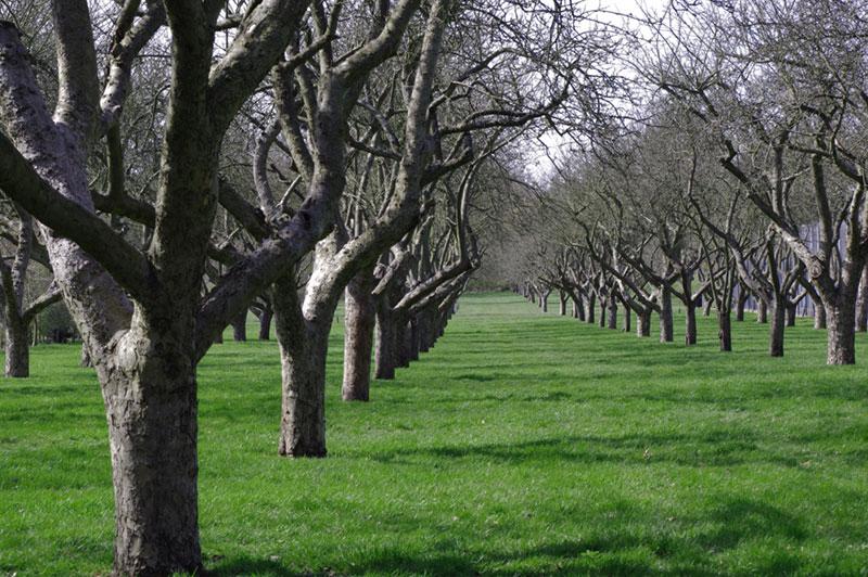 View inbetween rows of trees